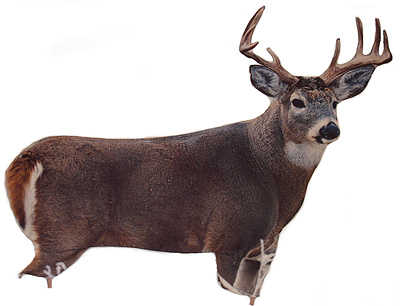 MONTANA DECOY WHITE TAIL BUCK DECOY